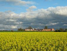 Free Yellow Field Stock Image - 760211