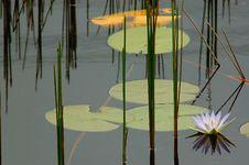 Free Flower On The Lake Stock Photo - 760350