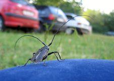 Free Beetle Royalty Free Stock Photo - 760915