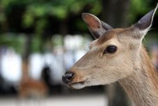 Free The Deer Royalty Free Stock Photos - 761228