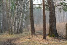 Free Spring Wood. Royalty Free Stock Images - 762169