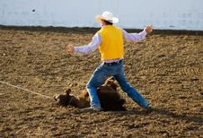 Free Steer Roping Stock Photography - 762312