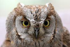 Free Owl Stock Images - 762444