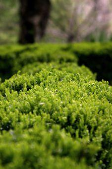 Free Bush Royalty Free Stock Photography - 763117