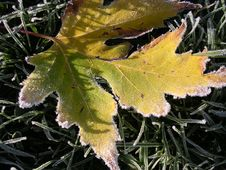 Frosty Winter Leaf. Royalty Free Stock Images