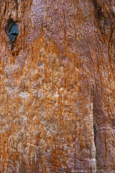 Free Bark Stock Photography - 763362