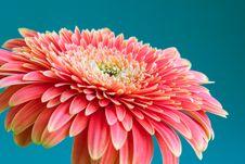 Free Daisy Stock Photography - 764082