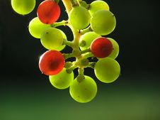 Free Transparent Grapes Royalty Free Stock Photos - 764208