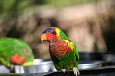 Free Colorfull Parrot Royalty Free Stock Photography - 764257