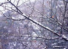 Free Winter Stock Image - 765851