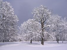 Free Winter In The Park III Royalty Free Stock Image - 766326