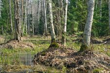 Free Spring Wood. Royalty Free Stock Photos - 766358