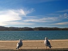 Free Two Seagulls Royalty Free Stock Photography - 766477