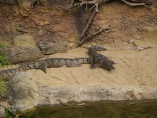 Free Crocodiles By The River Royalty Free Stock Image - 766586