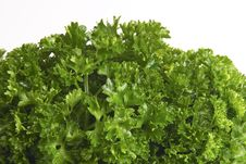 Free Fresh Parsley Stock Image - 766631