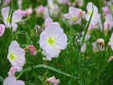 Free Pink Flower Stock Image - 766781