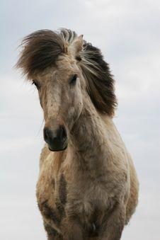 Free Dirty_horse Royalty Free Stock Photos - 766978