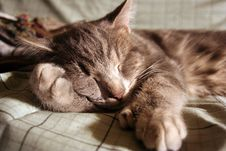 Free Kitty Napping Stock Photography - 767102