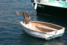 Free Bird In A Boat Royalty Free Stock Photo - 767895