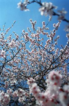 Tree Flowers In Spring Stock Photos
