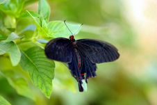 Free Black Butterfly On A Petal Royalty Free Stock Photography - 768197