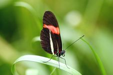 Free Butterfly Closeup Stock Image - 768201