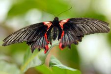 Free Butterfly Stock Photos - 768203
