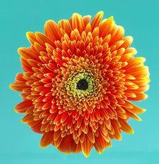 Free Daisy Stock Image - 769431
