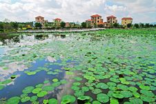 Free Green Pond Royalty Free Stock Images - 7619869
