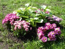 Flowerbed Stock Images