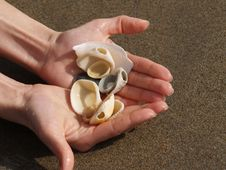 Free Shells Royalty Free Stock Photos - 7636988
