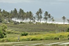Free Bali Rice-fields Stock Images - 7640964