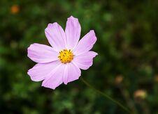Pink Flower Closeup Stock Images