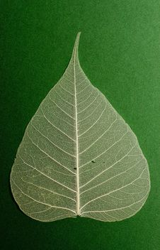 Free Green Leaf Stock Photography - 7658292