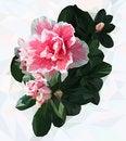 Free Azalea. Polygonal Flower. Stock Photography - 76721432