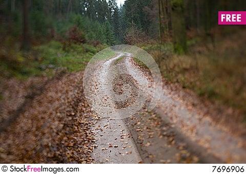 Free Wet Winding Wood Path Royalty Free Stock Image - 7696906