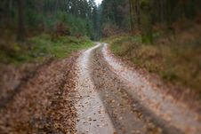 Wet Winding Wood Path Royalty Free Stock Image