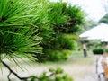 Free Japan Hiroshima Shukkeien Gardens Stock Image - 770231
