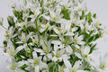 Free White Spring Flowers Stock Photo - 771940