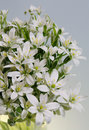 Free Bouquet From White Colours Royalty Free Stock Photo - 771955