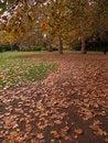 Free Autumn Path Royalty Free Stock Photos - 776188