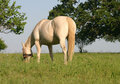 Free Horse In Pasture Stock Photos - 776353