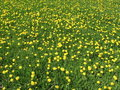 Free Yellow Meadow Stock Images - 779284