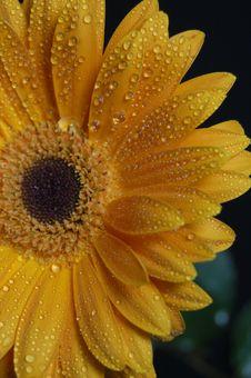 Free Crying Petals Stock Photos - 770653