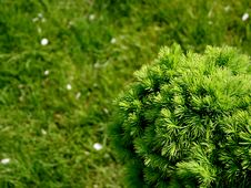 Free Tree Stock Photos - 770833