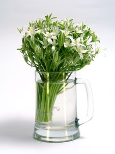 Free White Spring Flowers Stock Image - 771851