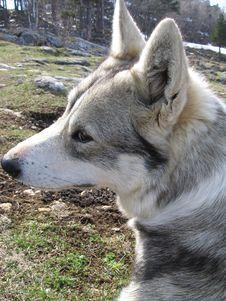 Free Dog Stock Image - 772001