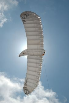 Free Birdkite Royalty Free Stock Photo - 772365
