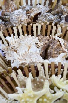 Free Seashells Being Sold By The Sea Side Royalty Free Stock Images - 773219