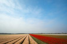 Free Field Of Flowers In Spring Royalty Free Stock Images - 774659